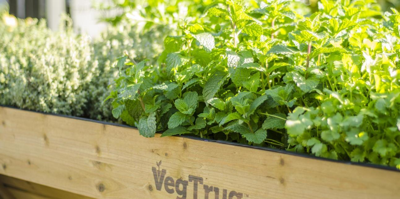 Planning on Planting? - 10% off our entire Veg–Trug Range!